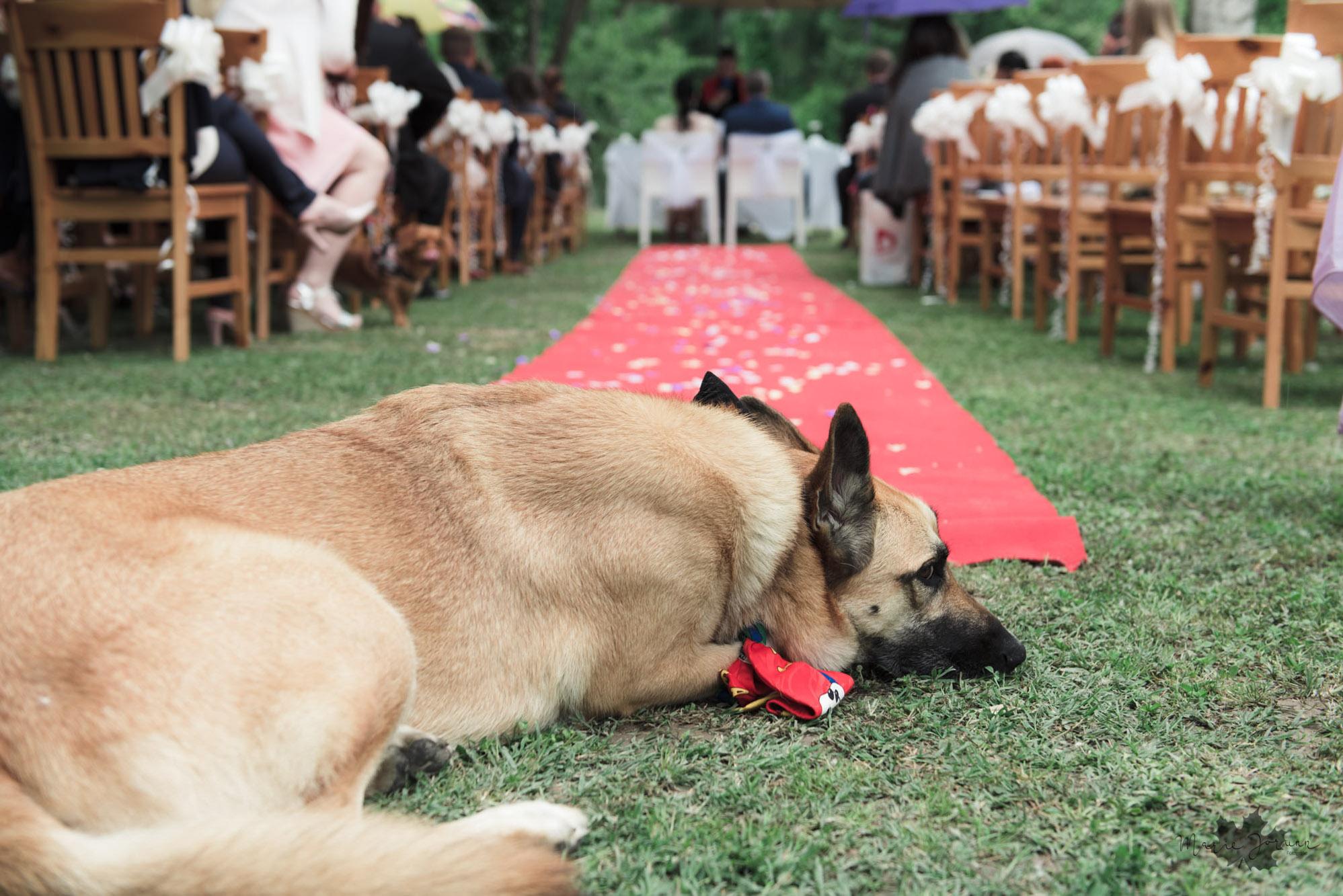 Marie Jorunn Fotografie Wedding23