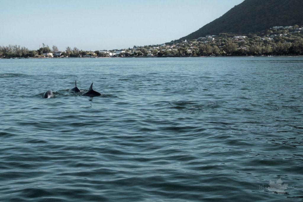 delphinschwimmen5