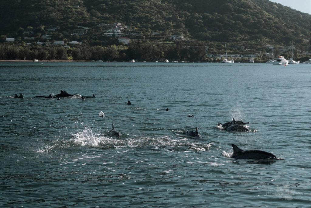 delphinschwimmen6
